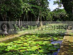 Victoria Amazonica Pond